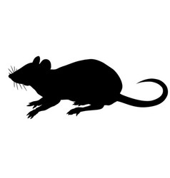 silhouette rat isolated on white background vector image