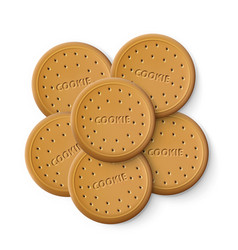 simple cracker chip cookies vector image