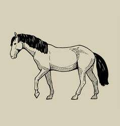 Walking horse hand drawn vector