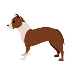 American pit bull terrier vector image
