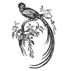 quezal bird vintage vector image vector image
