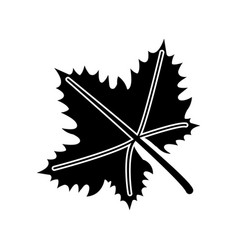Leave grape wine symbol pictogram vector