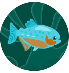 Aquarium fish Piranha vector
