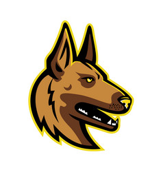 Belgian malinois dog mascot vector
