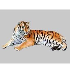 drawing realistic tiger vector image