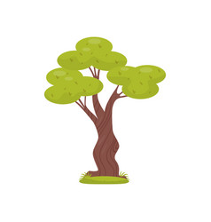 green tree element of tropical jungle forest vector image