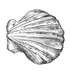 hand drawing seashell-2 vector image