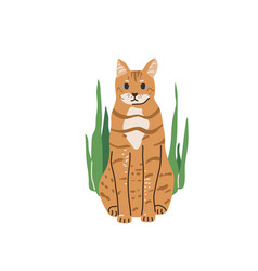 red color tabfunny cat with blue eyes sitting vector image