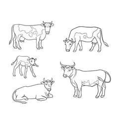 Set different cows in outlines vector