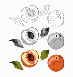 set peach sliced peach vector image