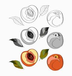 set peach sliced peach vector image
