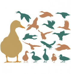 mallard duck vector image vector image