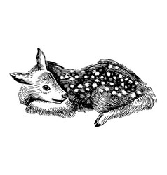 hand drawn baby deer in vintage style vector image vector image
