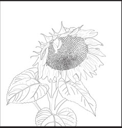 digital sunflower close up vector image