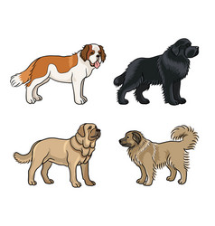 dogs different breeds in color set2 vector image