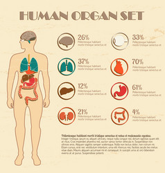 Internal organs set vector