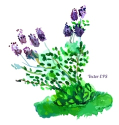 Beautiful lilac bush vector image
