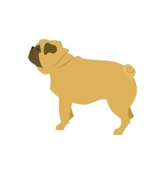 Dog flat pug vector image
