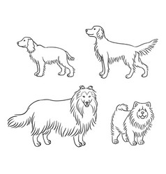 dogs different breeds in outlines set4 vector image