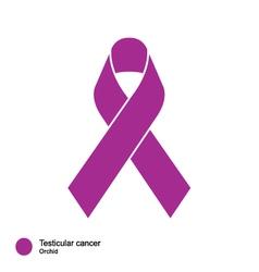 testicular cancer ribbon vector image