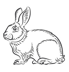 A rabbit vector