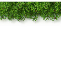 christmas tree branches background vector image
