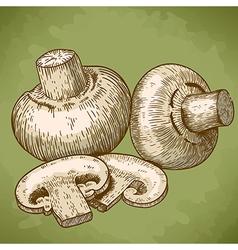 Engraving champignons retro vector