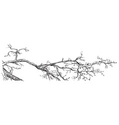 Hand drawing branch vector
