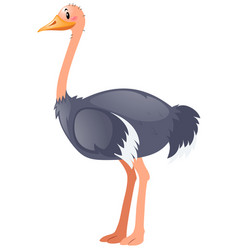 Ostrich standing on white background vector