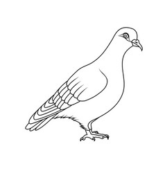 Coloring book pigeon vector
