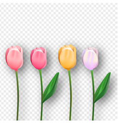 pink 3d isolated tulip spring flower set vector image