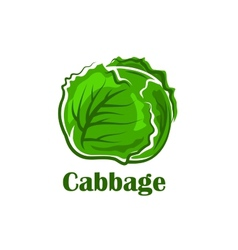 Cabbage vegetable with crunchy green leaves vector