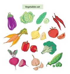 vegetables set detailed vector image