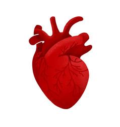 Anatomical human heart cartoon design medical vector