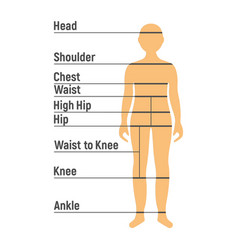 boy size chart human front side silhouette vector image