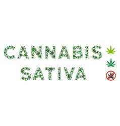 Cannabis sativa caption composition cannabis vector