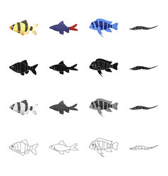 different types of aquarium and sea fish barbeque vector image