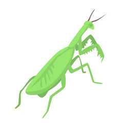 Female mantis icon isometric style vector