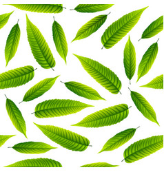 green rowan leaves isolated on white background vector image