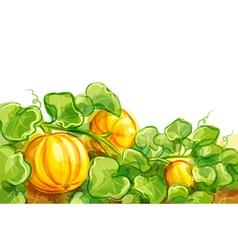 Growing pumpkins - EPS10 vector