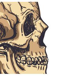 Human skull art hand drawn vector