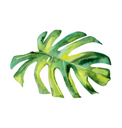 Isolated watercolor green plant leaf deocration vector