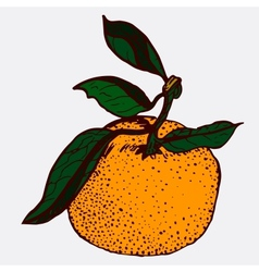 Tangerine sketch vector