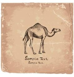 art camel2 vector image