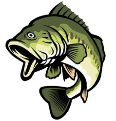 freshwater fish vector image