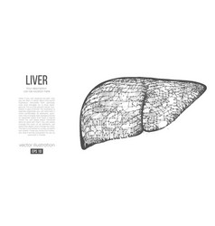 abstract silhouette polygonal organ liver vector image