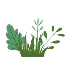 Bush foliage leaves nature botanical isolated icon vector
