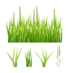 Grass realistic green nature pictures of vector