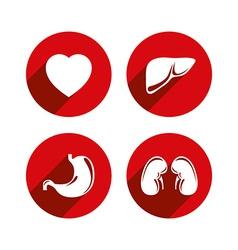 Human internal organs icons set vector image