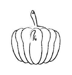 Pumpkin food diet healthy vector